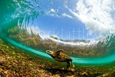 Clark Little Photography. One man stands in the wave and takes the picture at the last possible second.