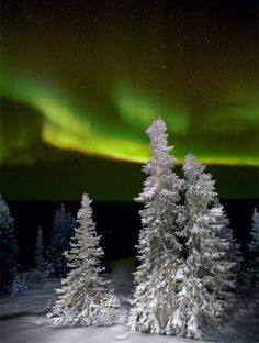 Northern Lights against the beautiful white snow and evergreens covered in snow.
