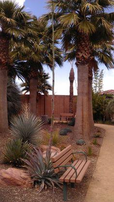 Agave in Palm Garden #SpringsPreserve