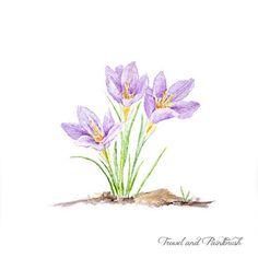Purple Crocus Watercolor Print – Trowel and Paintbrush