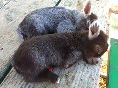 "Animal Life on Twitter: ""Sleeping baby donkeys https://t.co/modkVFXeEd"""