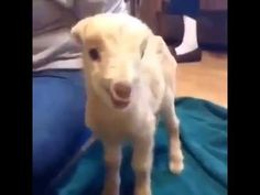 """C'mon, give it everything you got!"" 