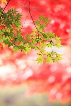 autumncollar