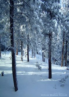Colorado Winter Forest Photo by JulieMagersSoulen