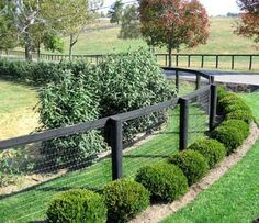 an idea for dog fencing. the boxwoods in front of it look really nice