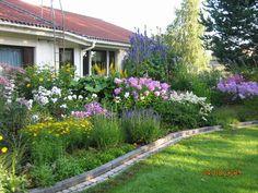 Koko kukkapenkissä on yli 100 lajiketta. Keväällä ... - Ilta-Sanomat