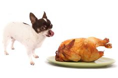 Yum! Turkey Pie Recipe for pets. Recipe from Dr. Ernie Ward's Chow Hounds: Why Our Dogs are Getting Fatter - a Vet's Plan to Save Their Lives.