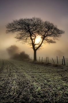 Misty, Frosty Morning (by Chris Charlesworth).