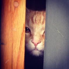 I. See. You.   Photo by ginger_cats • Instagram