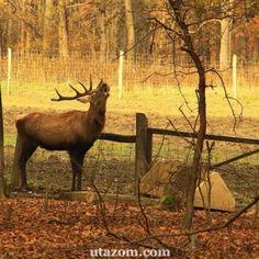 Kisvasúton a gemenci erdőben - Messzi tájak Európa gyalogtúra | Utazom.com utazási iroda Hungary, Moose Art