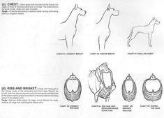Great Dane Standard Animal Medicine, Medicine Book, Great Dane Facts, Dogs, Animals, Art, Art Background, Animales, Animaux