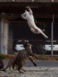 のら猫拳 Twitter アクセント 写真集 猫 躍動感