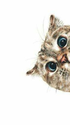 Animals And Pets, Funny Animals, Cute Animals, Kitten Wallpaper, Cat Drawing, Funny Animal Pictures, Cat Art, Animal Drawings, Cats And Kittens