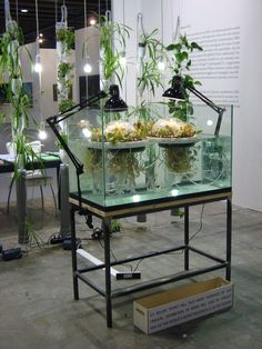 Jellyfish Farm - Studiomobile