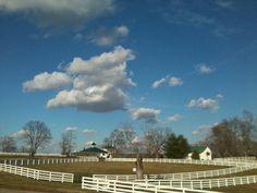 Undulata Farm 2013