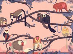 Mad About Monkeys Weird And Wonderful by Owen Davey