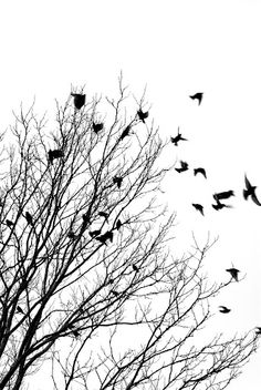Black and white picture of birds and winter tree
