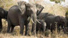 Safari i Sør-Afrika Elephants Photos, Elephant Love, Graphic Design Tutorials, Animals Beautiful, Backpacking, Safari, Asia, Stock Photos, Explore