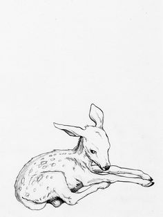 Possible pose for my doe tattoo Fawn Tattoo, Baby Deer Tattoo, Doe Tattoo, Bambi Tattoo, Tattoo Tree, Tattoo Ink, Freetime Activities, Deer Drawing, Deer Art
