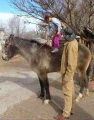 Trick Riding, Horses, Fun, Animals, Animales, Animaux, Vaulting, Horse, Words