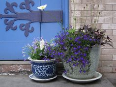 potted plants, flowers in shades of blue and purple