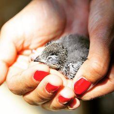 Pobrecito se cayó del nido.  #life #nature