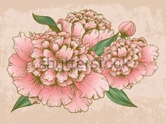 Vintage Chinese Peony Flowers/ Chinese Lunar New Year Vector ...