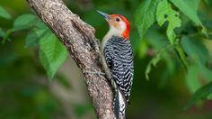 Bird Feathers Tail Beak