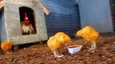 """Chicken Nuggets, from artist Banksy's 2008 installation """"The Village Pet Store and Charcoal Grill"""" in New York City."""