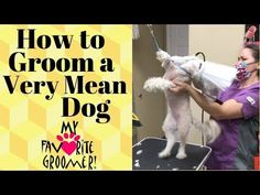 Grooming a Mean Dog - YouTube