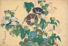 Hokusai Série dite des Grandes Fleurs Volubilis et rainette 10 planches, vers 1830-1834 Signé : « zen Hokusai litsu hitsu» Éditeur : Eijudô (Nishimuraya Yohachi) Cachet de censure : kiwame Nishiki-e ; format ôban yoko-e. 268 x 382 mm BnF, Estampes, Rés., De 10, J. B. 841