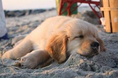 tired after a day at the beach. So cute