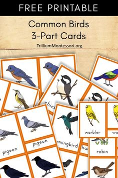 Free Montessori printable Common birds 3 part cards Montessori Classroom, Montessori Toddler, Montessori Activities, Kindergarten Activities, Montessori Materials, Montessori Homeschool, Montessori Elementary, Toddler Learning, Toddler Activities