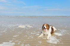 Your dog can make waves but don't let him drink them Dogs can pick up dangerous diseases by drinking lake or salt water