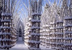 Magnificent Outdoor Cathedral Formed from Living Trees - My Modern Met