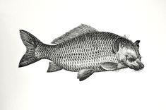 Hyäne-Fisch TBB Meer H008