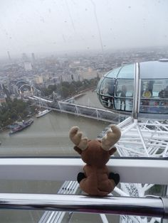 Mr. Moose on The London Eye
