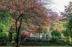 Visiting Mawarra: An Edna Walling Garden | Flickr - Photo Sharing!