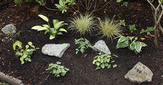 Ein Schattenbeet bietet sonnenempfindlichen Pflanzen einen sicheren Ort zum Gedeihen und Blühen. In unserer Anleitung erfahren Sie, wie Sie es richtig anlegen und finden Inspirationen zur Bepflanzung.