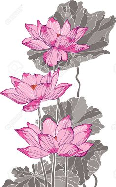 lotus drawing - Google 搜尋                                                                                                                                                     More