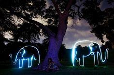 light animals