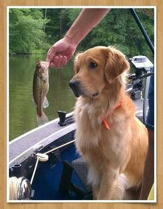 """LOL looks like that dog is thinking """"Seriously, is that the best you could do?""""... haha"""