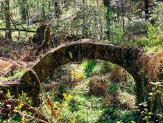 Find these old mill ruins on the trail at the Riverbanks Botanical Gardens! Plan your outdoor adventure in Lexington County today! Riverbank Zoo, Zoo 2, West Columbia, Over The River, Public Garden, Picnic Area, Great View, Horticulture, Vacation Ideas
