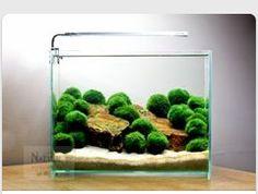 Easy aquascape design with marimo moss balls