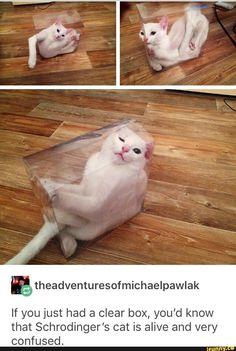 Funny Animal Memes, Funny Animal Pictures, Cute Funny Animals, Stupid Funny Memes, Cute Baby Animals, Cat Memes, Funny Cute, Animals And Pets, Cute Cats