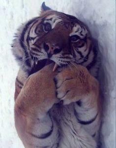 <3 Tigers!!