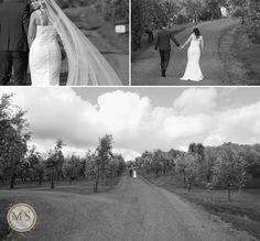 Siminovich Olive Estate, Bombay, NZ. Musae Studios » Award Winning Destination Auckland Hamilton Tauranga Rotorua Wellington Wedding Photographers | Celebrant » Abbie & Richard