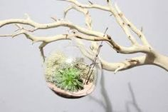 Decoración con ramas secas. Ideas para decorar el hogar con ramas secnas. Esta Navidad, decorar tu hogar con ramas secas.