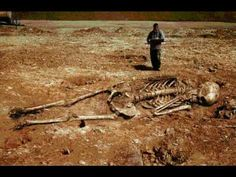 Hoax images purport to show skeletons of human giants (biblical Nephilim or Canaanites) allegedly found in Greece.: Giant Skeletons Found in Greece? Ancient Aliens, Ancient History, Giant Skeletons Found, Human Giant, Nephilim Giants, Nephilim Bones, Film Gif, Human Skeleton, Human Skull