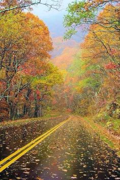 Fall foliage color on the Blue Ridge Parkway near Asheville, North Carolina. See the mountain fall leaf forecast at www. Foto Nature, All Nature, Blue Ridge Parkway, Beautiful World, Beautiful Places, Beautiful Pictures, Beautiful Roads, Beautiful Scenery, Simply Beautiful